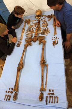 Извлеченный из гробницы скелет фараона Усер-иб-Ра Сенебкая