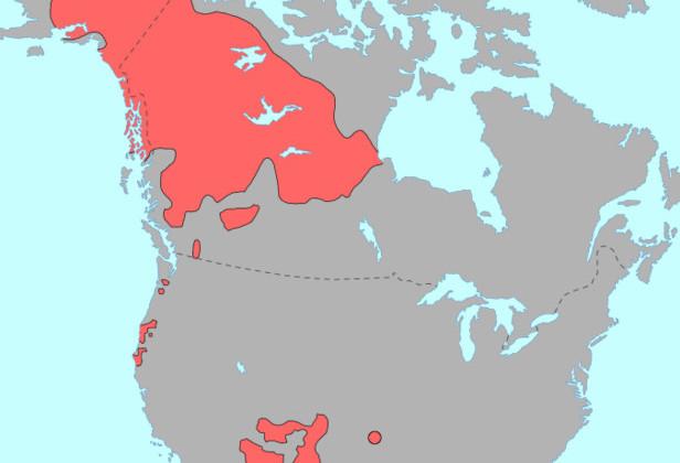 География распространения языков на-дене