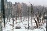 Центральный бульвар Грозного, через полтора месяца после ввода российских войск в Чечню.