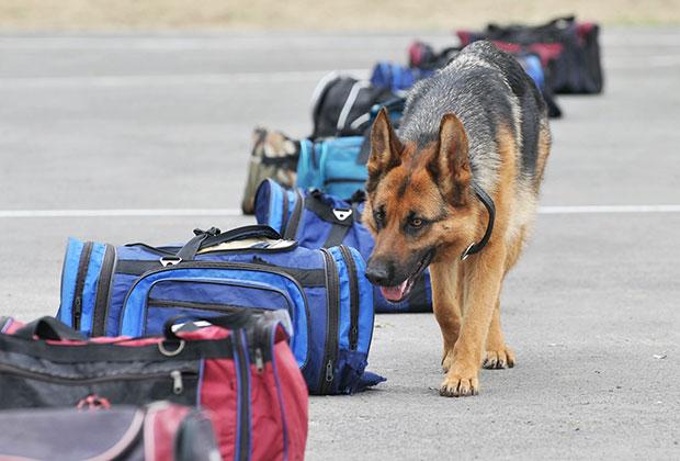 Обучение собак в Ростовской школе служебно-разыскного собаководства МВД России