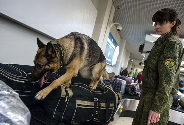 Досмотр багажа в зоне таможенного контроля аэропорта Кольцово в Екатеринбурге
