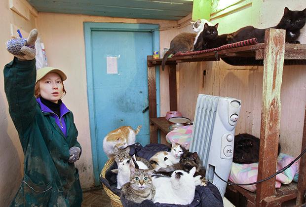 Волонтер в комнате для содержания кошек новосибирского городского приюта