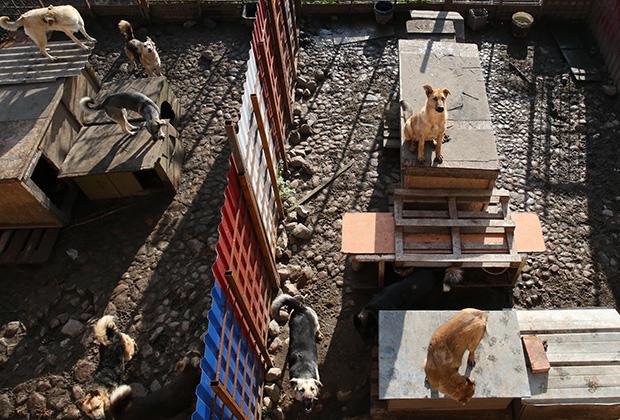 Собаки на территории приюта для бездомных животных в поселке Славянское