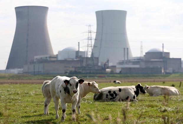 Коровы рядом с ядерным реактором в Бельгии