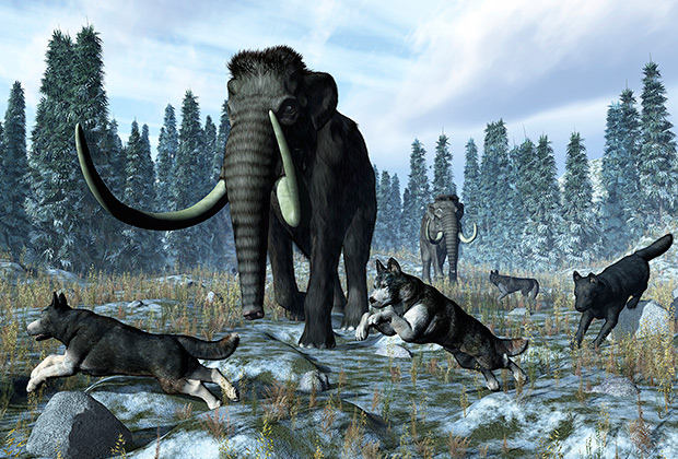 Волки и мамонт