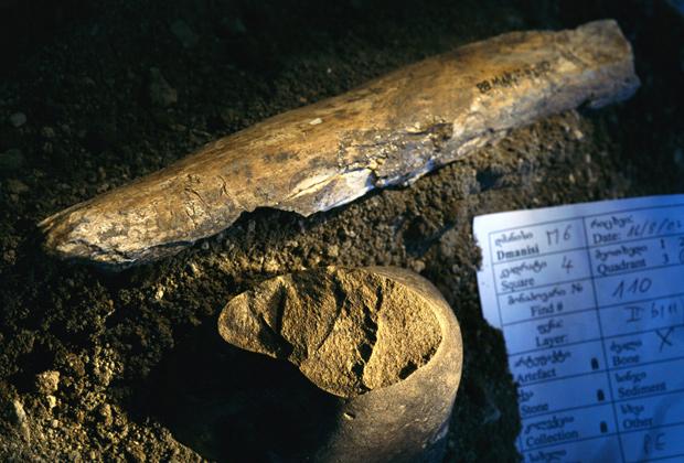 Каменное орудие труда, принадлежавшее гоминиду, жившему около 1,8 миллиона лет назад. Найдено в Грузии