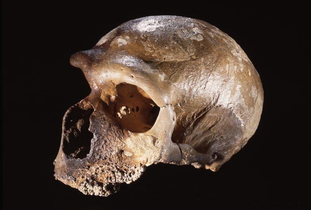Череп неандертальца, найденный в пещере Гваттари (Италия). Возраст черепа — около 50 тысяч лет.