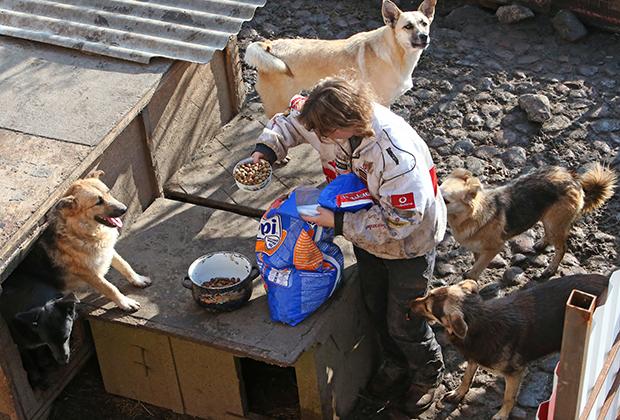 Пять мифов о приютах для бездомных животных, которые пора развеять: Звери: Из жизни
