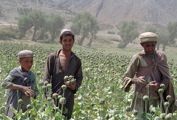 Сбор опиумного мака в провинции Нангархар, 1996 год
