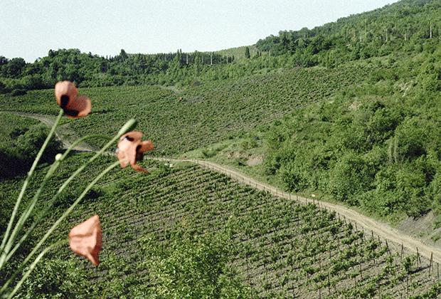Виноградники в Крыму. 1985 год