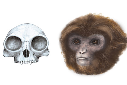 древнейшая ископаемая человекообразная обезьяна