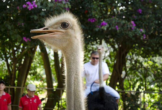 В парке около водопада Пренн можно покататься на слонах и страусах