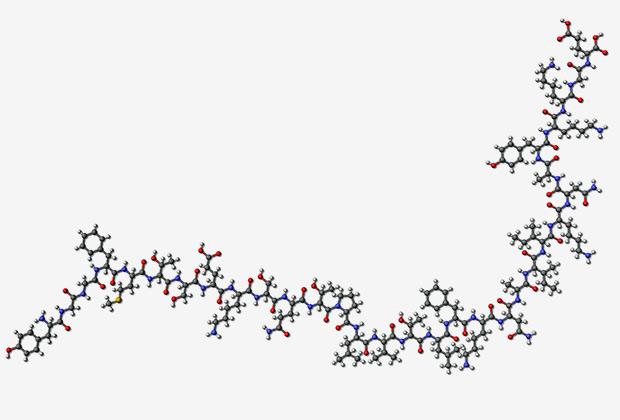 Молекула бета-эндоморфина