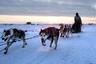 Житель Шишмарёва возвращается домой после участия в гонках на собачьих упряжках.