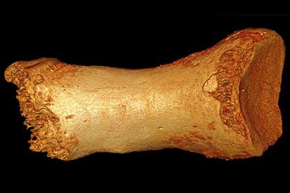 Фрагмент кости неандертальца