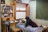 В исламе собака считается нечистым животным, поэтому держать их в доме запрещено. Владельцы четвероногих стараются не появляться с ними в общественных местах, чтобы не привлекать внимание полиции.