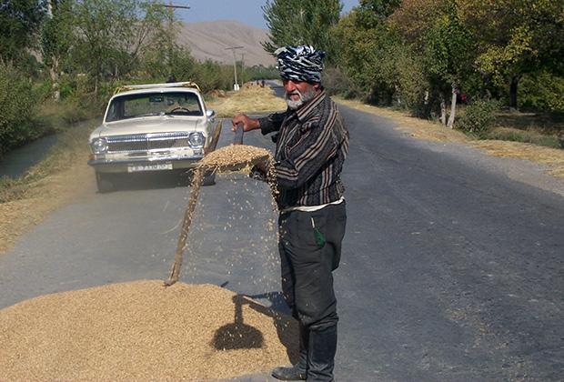 Зерно высыпают на дорогу и ждут пока по нему проедет машина