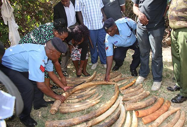 Конфискованная у браконьеров в Кении слоновая кость