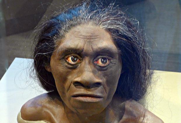 Реконструкция внешнего вида флоресского человека