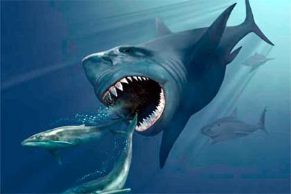 О вымирании гигантских акул
