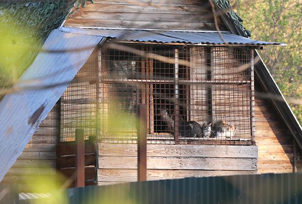 29 апреля 2016 года. Животные частного приюта «ЭКО Вешняки» на улице Аллея Первой Маевки, где сотрудники полиции обнаружили более 40 погибших кошек и собак.