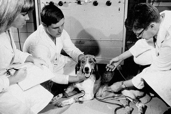 Первый кардиостимулятор на плутонии имплантировали собаке в 1969 году