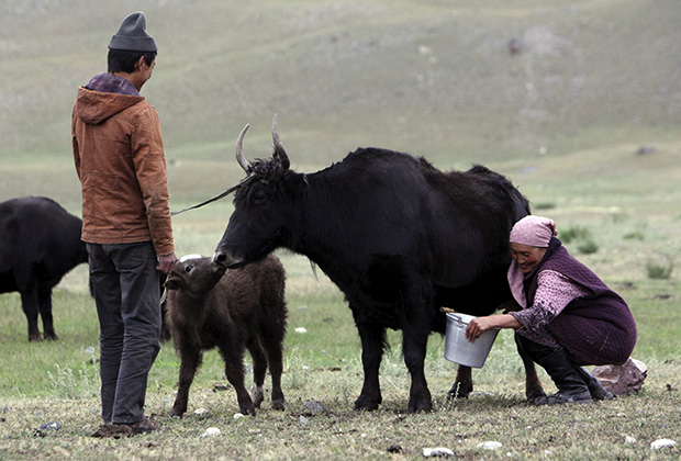 Около трети киргизских женщин и девушек в возрасте от 15 до 49 лет, когда-либо состоявших в браке, подвергались домашнему насилию