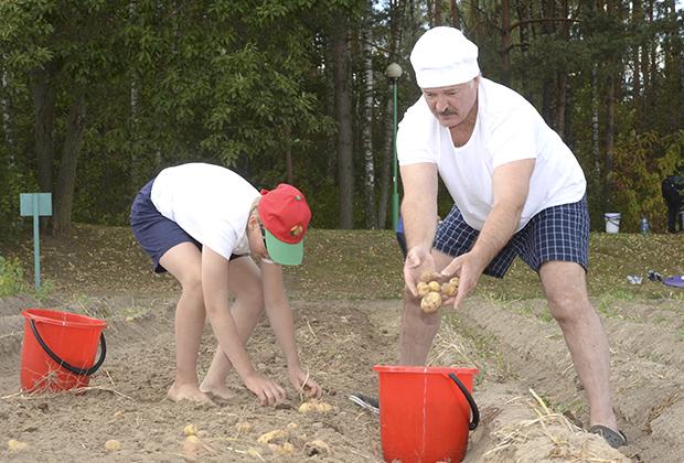 В августе 2015 года Лукашенко с сыном Колей за один день накопали 70 мешков картошки