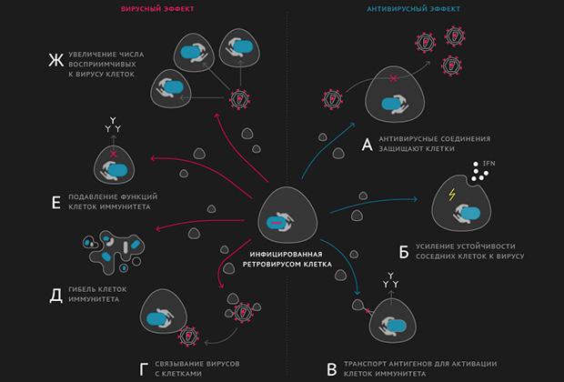 Участие внеклеточных везикул в распространении вируса и борьбе против инфекции