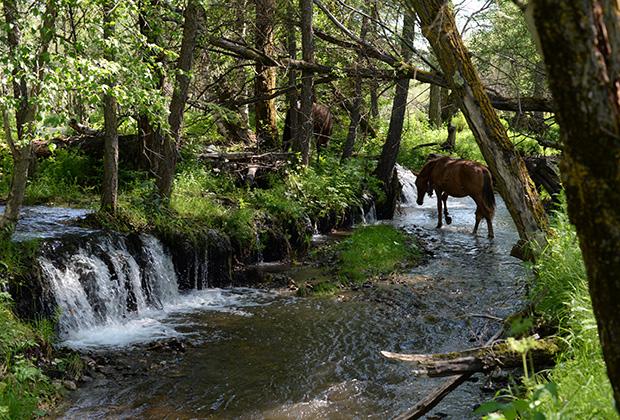 Многие реки и родники для местных являются священными местами, поэтому цветы и травы возле них не рвут
