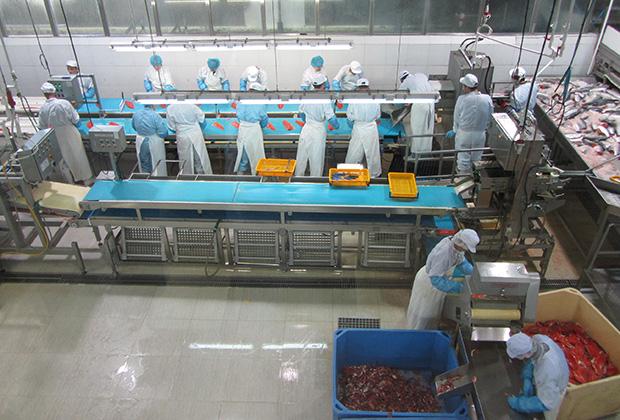 Переработка рыбы на предприятии «Витязь-Авто»