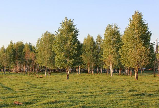«Попов луг» расположен на окраине Переславля