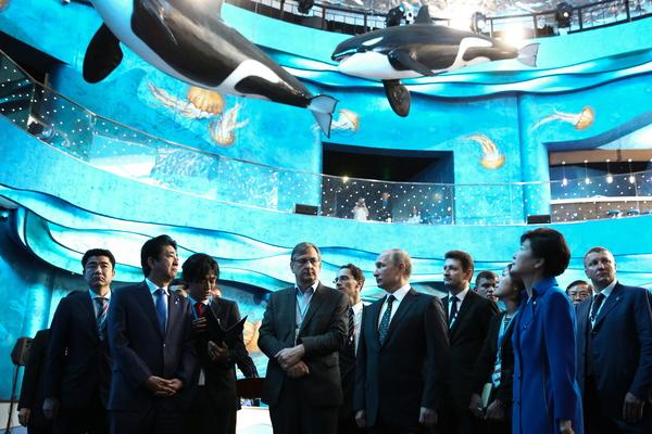 Президент Владимир Путин на церемонии открытия Приморского океанариума