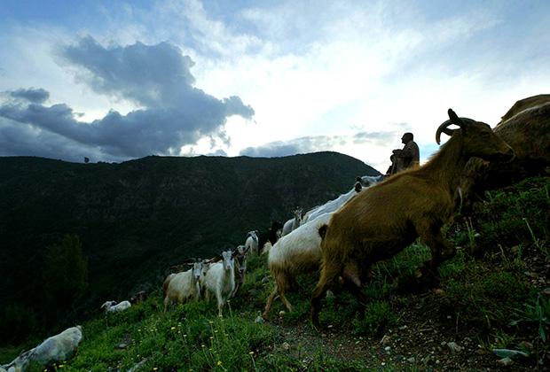 Болгарские фермеры