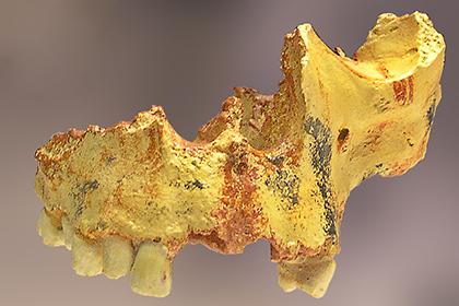 Доисторические европейцы неготовили пищу наогне— ученые