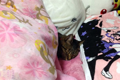 Сонные коты и псы под одеялами стали героями соцсетей
