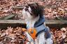 Как отличить дизайнерского пса от обычного плода любви между собаками разных пород? Очень просто: новые породы созданы не случайно, а намеренно, с вполне конкретными целями и задачами.
