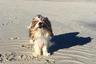 «Идеальных» собак любят заводить знаменитости. Например, Сильвестр Сталлоне — гордый хозяин пагля, Дженнифер Энистон приглянулся лабрадудель, а Рианне, Блейк Лавли и Эшли Тисдейл — крошки мальтипу.