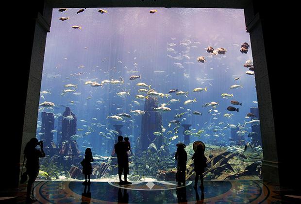 В отеле Atlantis есть огромный аквариум с богатой морской фауной