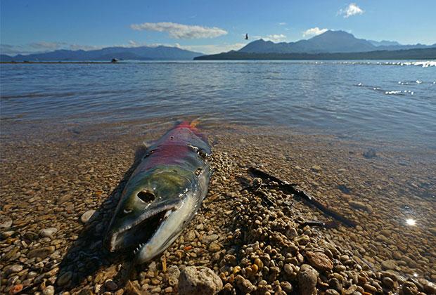 Загрязнение Балтийского моря причиняет вред фауне