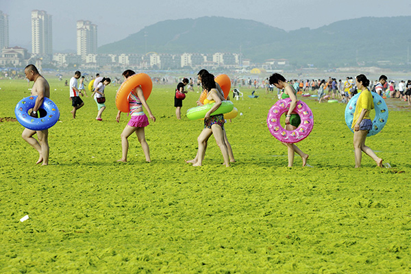 Swimmers walk with their floats on a beach covered by algae, in Qingdao, Shandong province, China, July 24, 2015. Picture taken July 24, 2015. REUTERS/Stringer CHINA OUT. NO COMMERCIAL OR EDITORIAL SALES IN CHINA