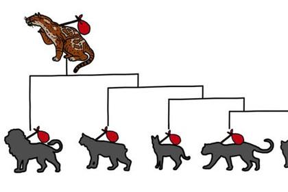 Эволюцию домашних кошек показали в рисунках
