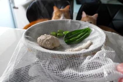 Японский шеф-повар порадовал котов-гурманов куриными суши