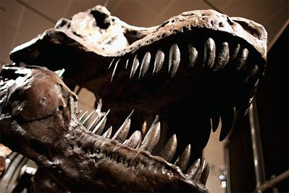 Найден самый крупный динозавр в мире