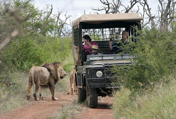 В национальных парках Свазиленда можно увидеть всю большую африканскую пятерку