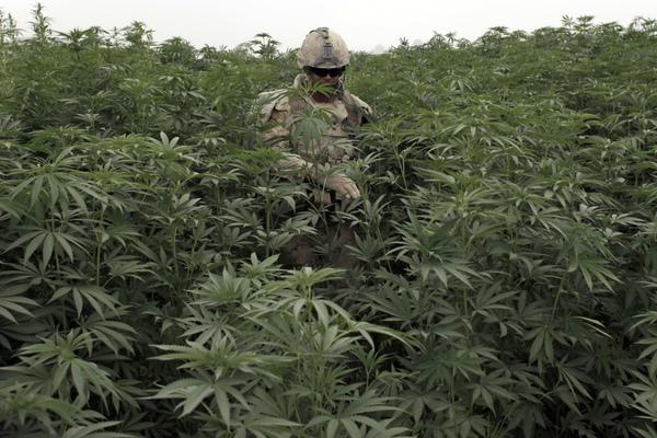 Умирал ли кто от марихуаны как сохранять марихуану