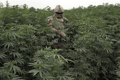 Зафиксирован первый в мире случай смерти от передозировки марихуаны