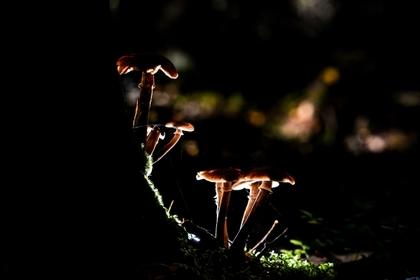 Аномальная зима принесла грибы в российские леса