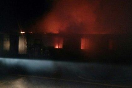 Напожаре вворонежском приюте для животных сгорели 50 щенков