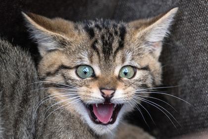 Погубившая в кипятке десятки кошек женщина заплатит полмиллиона
